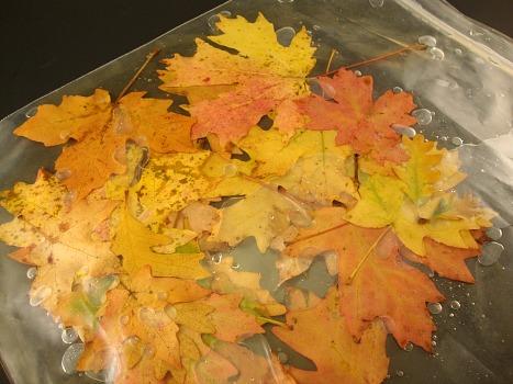 Листья в глицерине своими руками мастер класс 8