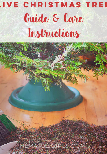 Live Christmas Tree Guide & Care Instructions