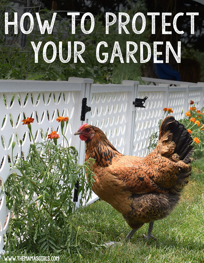 How to Enclose Your Garden To Protect From Critters
